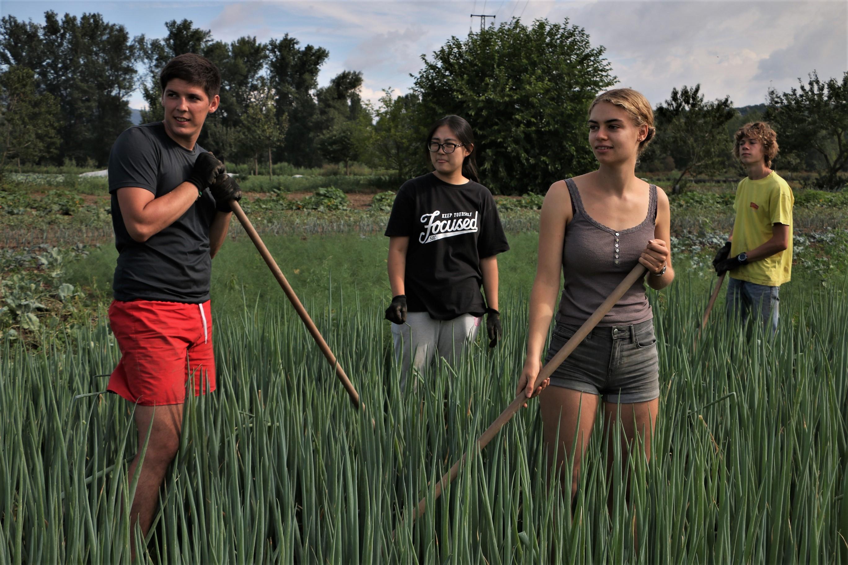 Campleaders wanted: na Plzeňsku nebo na ekofarmě