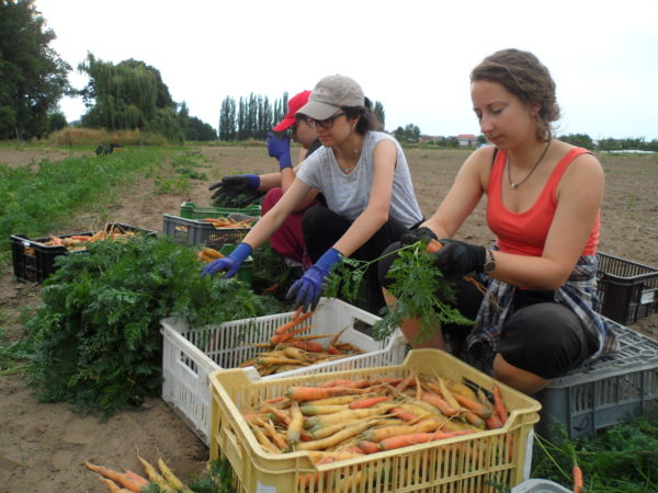 Organic Farming at Camphill Community I